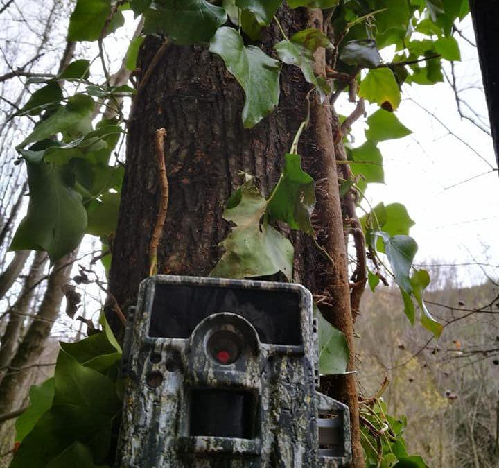 Furti reiterati presso la parete di arrampica allestita a Serino. Installata fototrappola per individuare i responsabili – FOTO