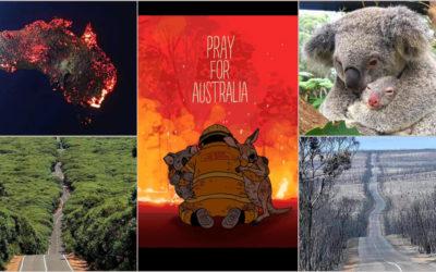 Con il cuore e la mente in Australia. Morti, circa, 480 milioni di animali  – APPROFONDIMENTO